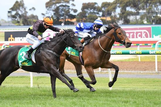 Stablemate's surge edges out