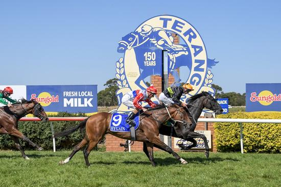 Cameo Lass delivers Terang double for stable
