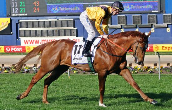 Experienced Track Work Rider Required - Newcastle