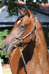 Husson - Personification Filly
