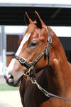 Rubick - Exceed Expectation Colt