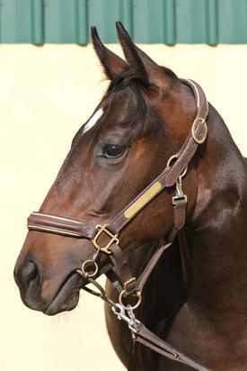 Valentia x Hayward Filly Head Shot.JPG