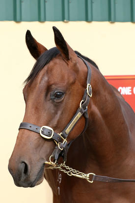 Wanted x Next Top Model filly head shot.JPG