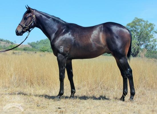 Limited Shares Remaining in a Stunning Gelding
