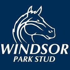 For Lease - Quality 2YO Filly From The Famed Windsor Park in New Zealand