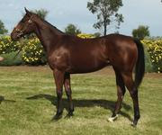 Yearling Written Tycoon Filly 5% Share $1,650.00