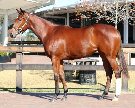 Shares Available In BOBS Filly By Star Turn