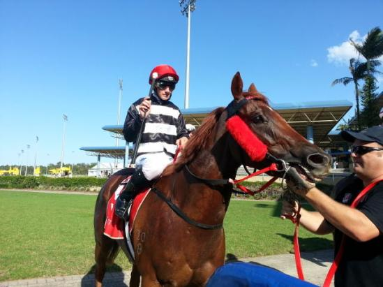 Snowtop too tough for rivals at Sunshine Coast