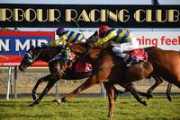 Darci's Affair Wins the Coffs Harbour Gold Cup!