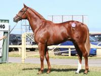 2015 CRACKING YEARLINGS PURCHASED THIS AUTUMN