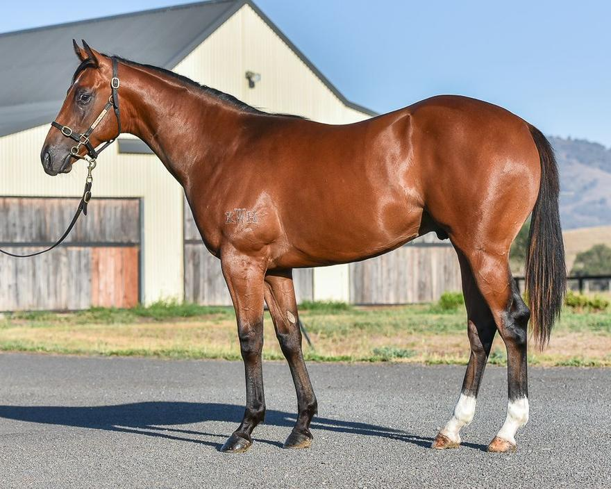 Ownership Opportunity Time For War colt