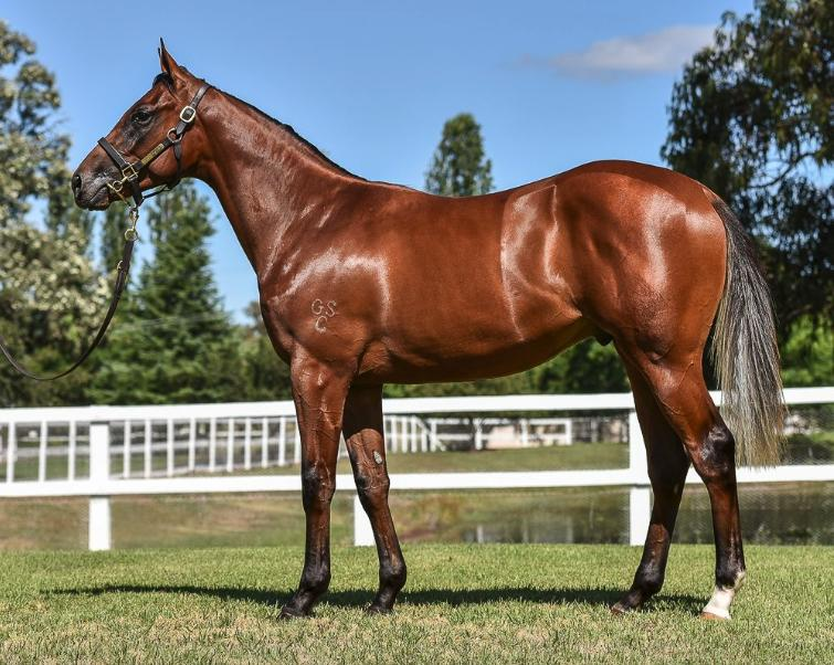 Ownership Opportunity Smart Missile colt