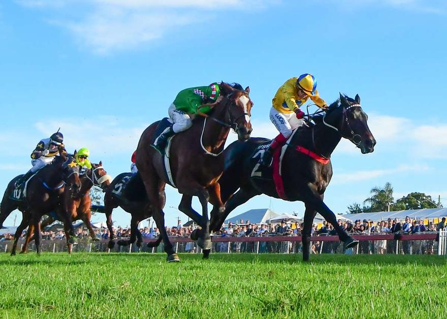 FRESH FIRST CRUSH READY FOR GRAFTON CUP