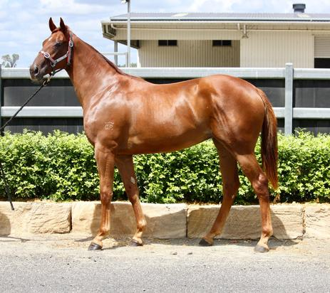 MUNCE FAMILY TO OFFER YEARLING AT MAGIC MILLIONS SALE
