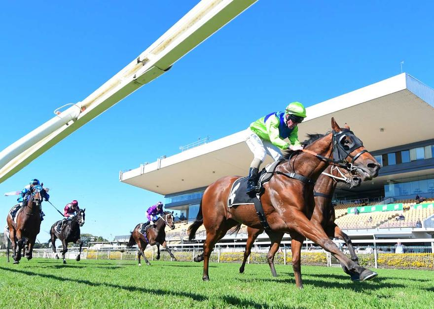 THE GOLDEN BEAR WINS ON DEBUT FOR STABLE