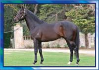 Half-Brother to City Winner
