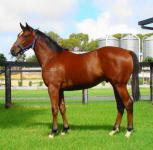 Star ORATORIO 2YO filly BANCHEE in ownership change