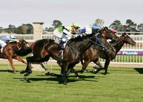 New Stakes Winner For Shamardal