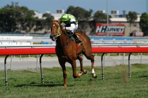 Thirty Seven Megs to run at Doomben Saturday 29 May 2010