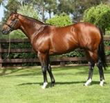 Oratorio Second Stakeswinner in Southern Hemisphere