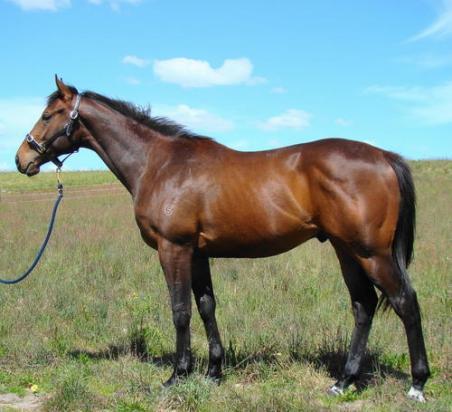 Delbrigde Racing 2-y-old's Enjoying Spring Growth