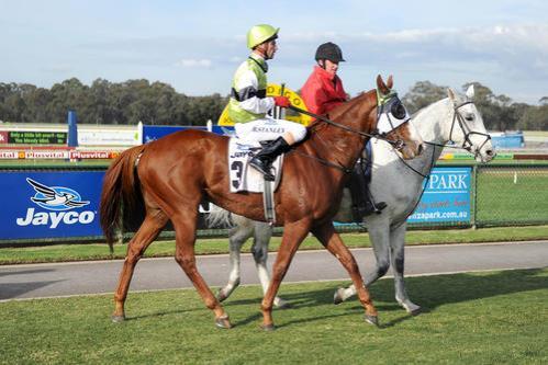 Georgia's Boy Resumes at Geelong