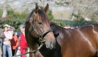 Lucky Unicorn sires first winner in Hong Kong