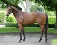 Winning Debut For NZ$400k Darci Brahma Son