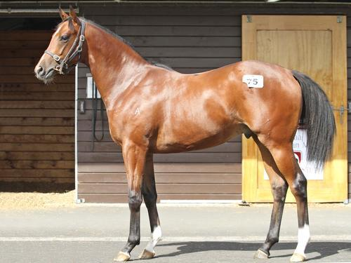 Shares for Sale In Darci Brahma Colt with Mark Kavanagh