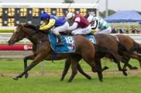 Dehere 3-y-old wins Group 2 Queensland Guineas