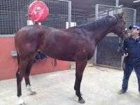 Final Share Available in Dehere Lady Diva colt