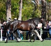 Another Group One Winner for Bernardini