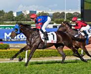 Pierro Stays Perfect In Run To The Rose