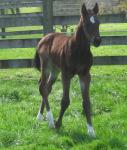 First Foal to Shamoline Warrior