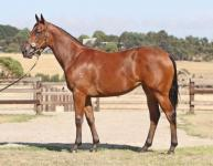 DENMAN FILLY AVAILABLE AND IN DEMAND