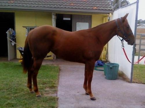 Shares Available in Manhattan Rain Filly