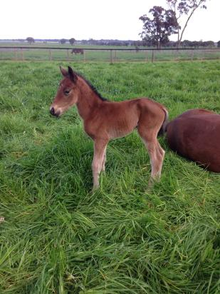 First Foal for Cinnamon Girl