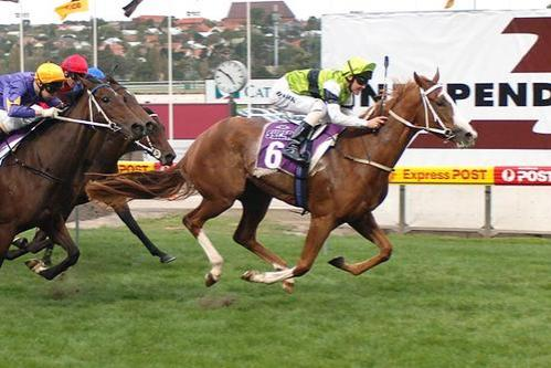 Ginspiel - City Winner at Moonee Valley.jpg