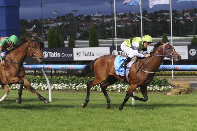 Pakari Toa - City Winner at Moonee Valley.jpg