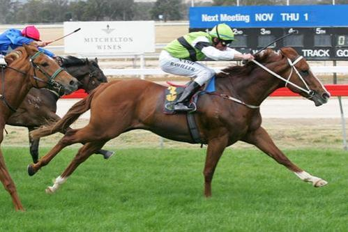 Comic Echo - 5 wins including winning at Moonee Valley.jpg