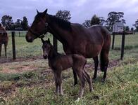 New Foal for Cinnamon Girl
