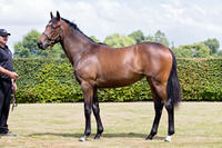 New Zealand 2017 Karaka Yearling Purchase