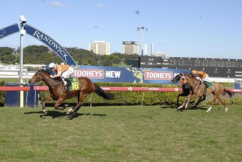 M'Lady Pedrille 4th Emg gains a start and wins