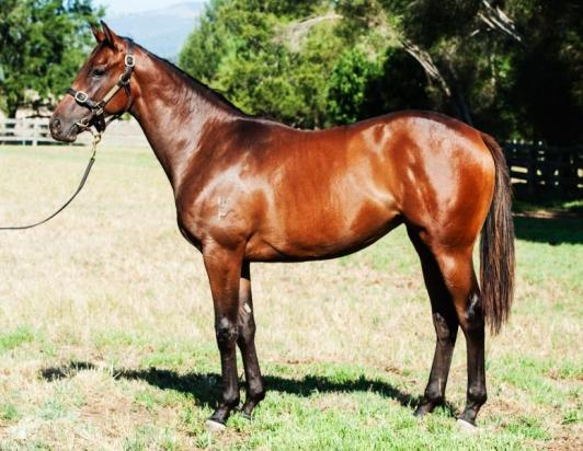 FLYING SPUR / ANOTHER TIME FILLY