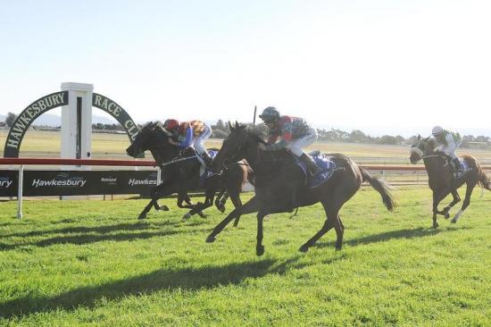 PROGRESSIVE Filly Loulinda – Wins at Hawkesbury