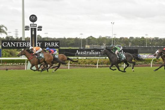 Magical Stance dazzles at Canterbury