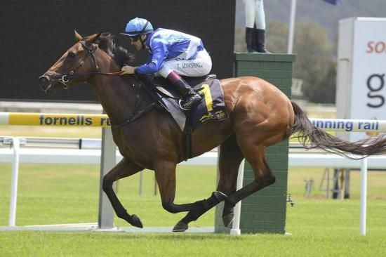 Absolute Empress impresses at Gosford