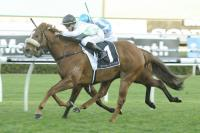 Wolfgram celebrates stable switch in style