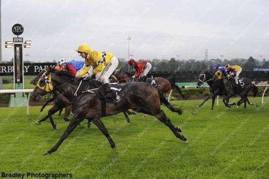 Tauriel has a solid win at Canterbury