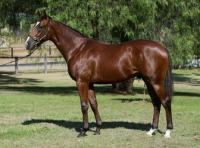 Medaglia / d'Oro Colt available